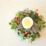 Living Succulent Wreath / Centrepiece