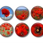 Fridge magnets - Red Poppies - set of 6 fridge magnets
