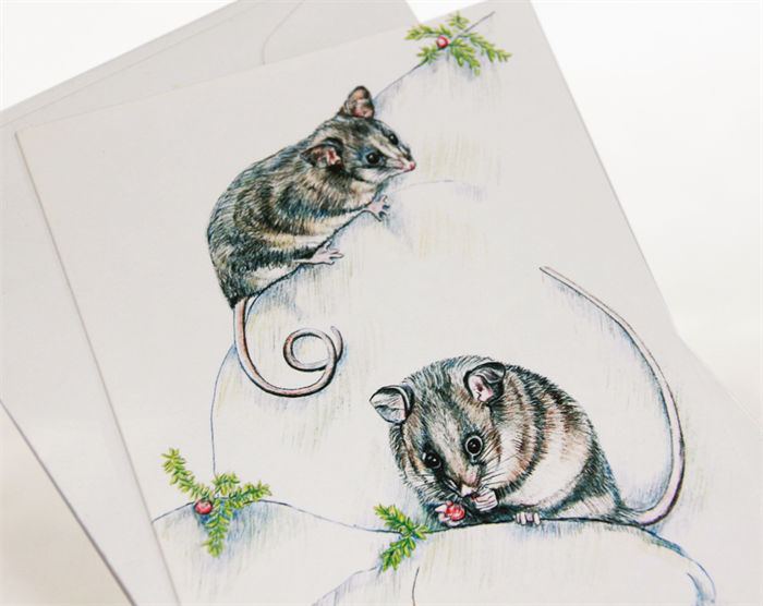 Mountain pygmy possum greeting card australia wildlife art mountain pygmy possum greeting card australia wildlife artgrasshopper berries m4hsunfo