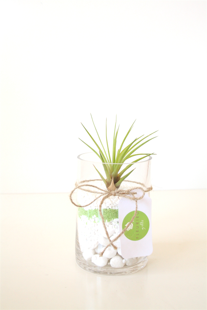 Air plant vase with green and white pebbles fleurieu for Air vase