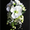 Spirit Island Teardrop Bouquet