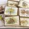 CUSTOM Gift Box of 8 greeting cards - Australian animal bird wildlife drawings