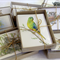 CUSTOM Gift Box of 8 greeting cards - Australian animal bird wildlife drawings