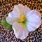 Free Shipping White Hibiscus Hair Clip