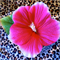 Free Shipping Pink Hibiscus Hair Clip