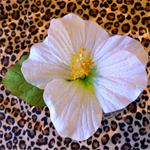 Free Shipping White Hibiscus Hair Clip