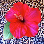 Free Shipping Red Hibiscus Hair Clip