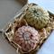 CUSTOM ORDER for KOZ Flower Design Vegetable Soaps In Gift Boxes.