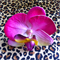 Free Shipping Orchid
