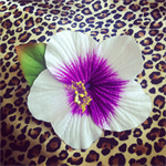 Free Shipping Purple Hibiscus Hair Clip