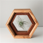 Timber-Air-Plant-Holder-Hexagon
