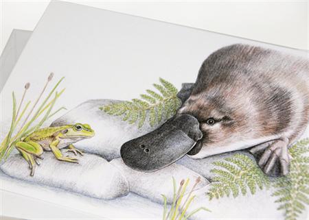 Platypus & Frog greeting card Australian Wildlife Conservation series animal art