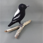 Needle felted Australian Magpie