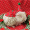 Christmas hat and cape for your guinea pig or small rodent . choose your fabric