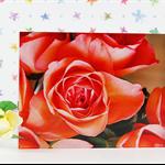 Rose - Acrylic Block with close-up photograph