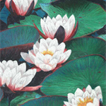 Large Print from an original Pastel Painting with a group of Water lilies.