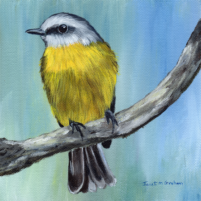 Eastern Yellow Robin, Australian Bird Wildlife, Original ...