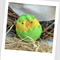 Easter Chick Felt Catnip Toy (Lime green)