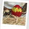 Easter Chick Felt Catnip Toy (Red)