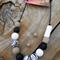 Zebra Clay Necklace