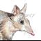 Eastern Barred Bandicoot greeting card Australian wildlife art