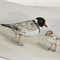 Hooded Plover greeting card inc DONATION, Australian wildlife art, beach-nesting