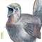 Superb Lyrebird greeting card Australian wildlife art bush hen with Pilot bird