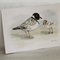 Hooded Plover greeting card Australian wildlife art, beach-nesting bird