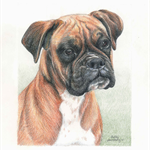 Pet Portrait in Colour A5, custom drawing from your photo of animal or bird.