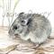 "New Holland Mouse 12""x 8"" Print Australian wildlife wall art with matt frame boa"