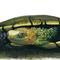 Tortoise greeting card Australian wildlife art, Western Swamp Tortoise, reptile
