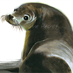 Australian Sea Lion greeting card Australian wildlife art, painted portrait seal
