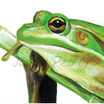 Green & Gold Frog greeting card Australian wildlife art, reptile, tree frog