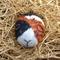Hand painted Guinea pig rock- Tri colour