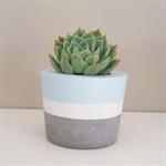 Concrete pot two tone