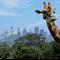 Sydney Giraffe Card