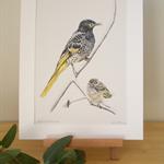 "Regent Honeyeater 12""x 8"" Wildlife Art Print - Australian bird with baby chick"
