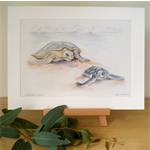 "Turtles 12""x 8"" Print Australian wildlife wall art with matt frame board"