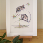 Mountain Pygmy Possums 12x8 inch Print Australian wildlife wall art