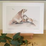 "Australian Sea Lions 12""x 8"" Print Australian wildlife wall art with matt frame"