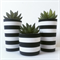 Concrete Trio - Succulent Planter Set - Urban Decor