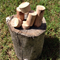 Tree Branch wooden blocks