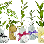 Plants for wedding favours