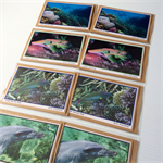 Australian Photography Blank Set of 8 Greeting Cards for all Occasions