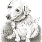 Pet Portrait in BW A4, Custom illustration of animal dog cat horse bird