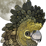 Black Cockatoo Moon - A4 Giclée art print on HAHNEMUHLE photo rag paper