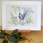 "Superb Lyrebird 12""x 8"" Print Australian wildlife wall art with matt frame board"