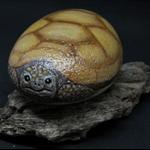 Handpainted turtle