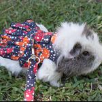 Guinea pig dress and matching leash . Skull print