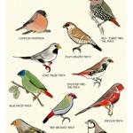 Ten Finches Bird Art - Educational Bird Art Print A4 print